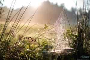 Spinnennetz im Gegenlicht, Adetswil September 2016